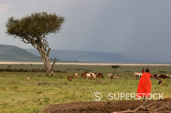 Masai man, Masai Mara, Kenya, East Africa, Africa : Stock Photo