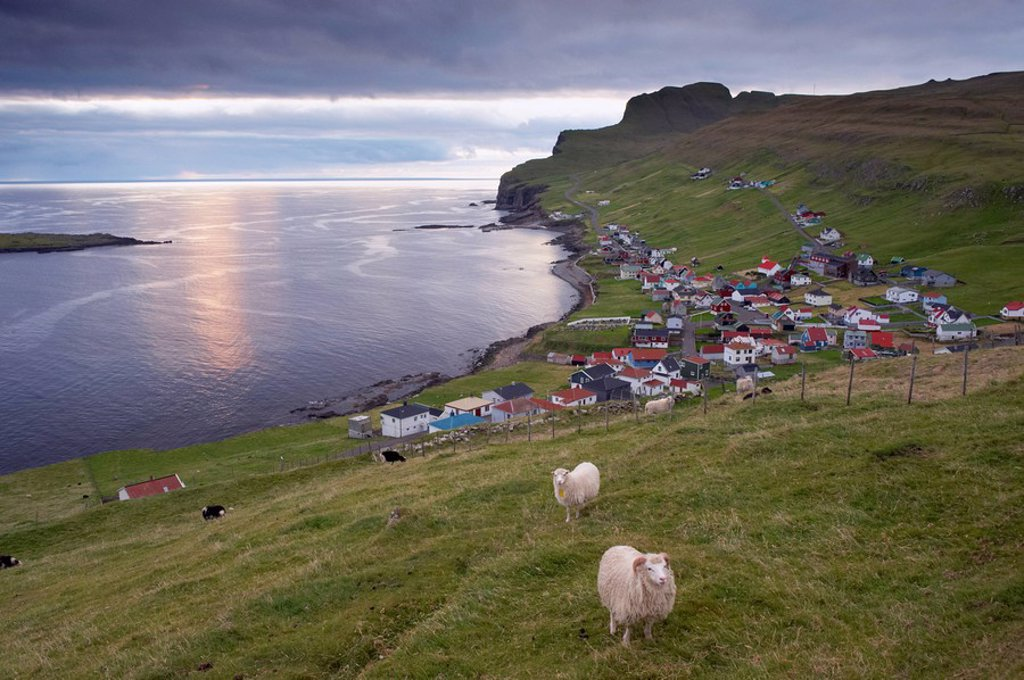 Stock Photo: 1890-99450 Sumba, picturesque village on south_west tip of Suduroy Island, and sheep, Suduroy Island, Faroe Islands Faroes, Denmark, Europe
