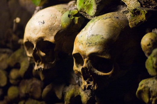 Close-up of human skulls in the catacomb, Paris, Ile-de-France, France : Stock Photo