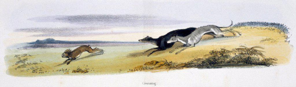 ´Coursing´, c 1845. : Stock Photo