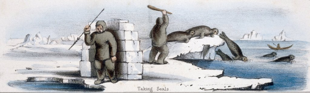 ´Taking Seals´, c 1845. : Stock Photo