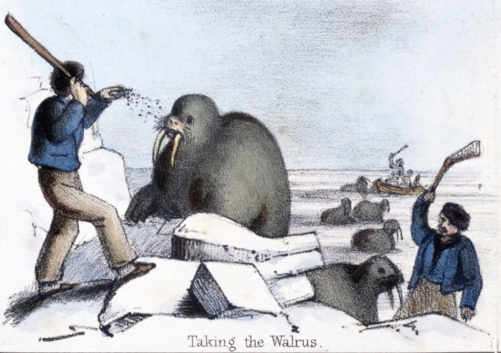 ´Taking the Walrus´, c 1845. : Stock Photo