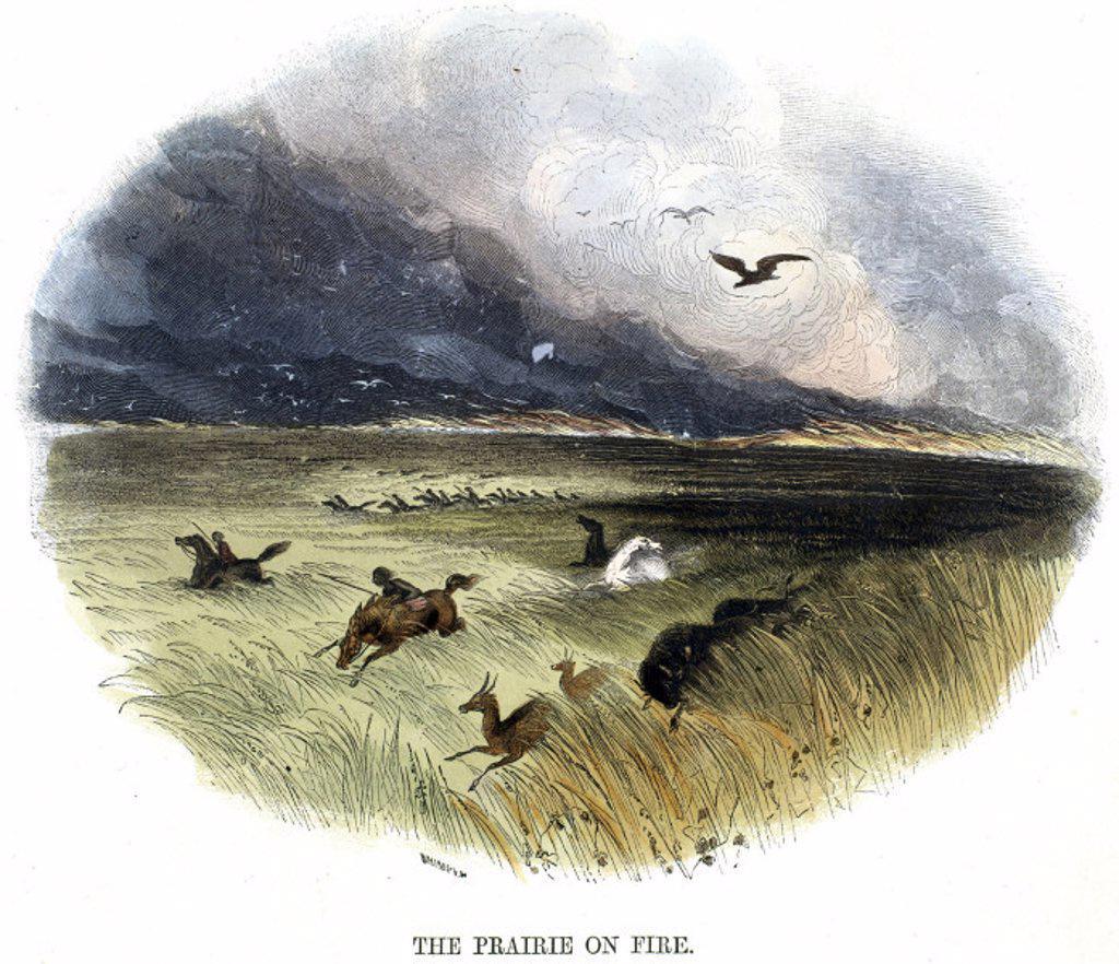 ´Prairie on Fire´, 1849. : Stock Photo