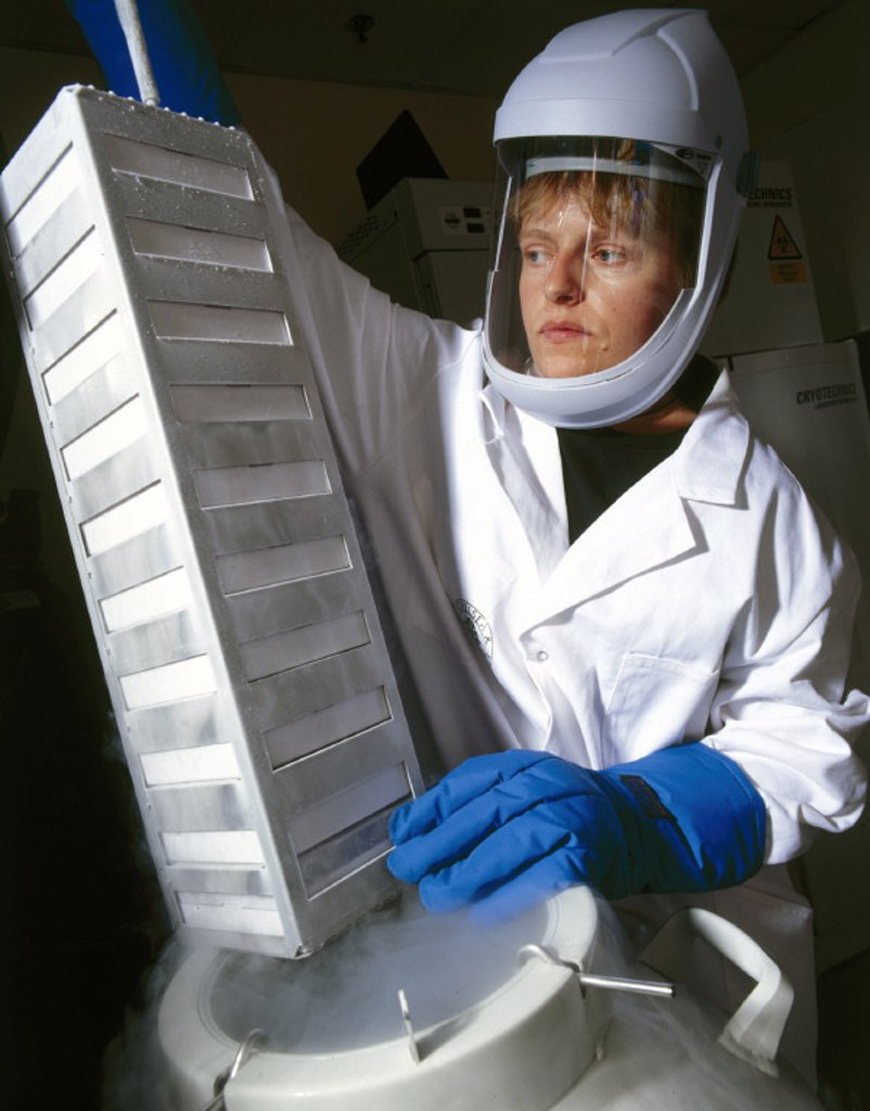 Stock Photo: 1895-20990 Producing bone cells for use in ´bio-glass´ bonding, October 2001.