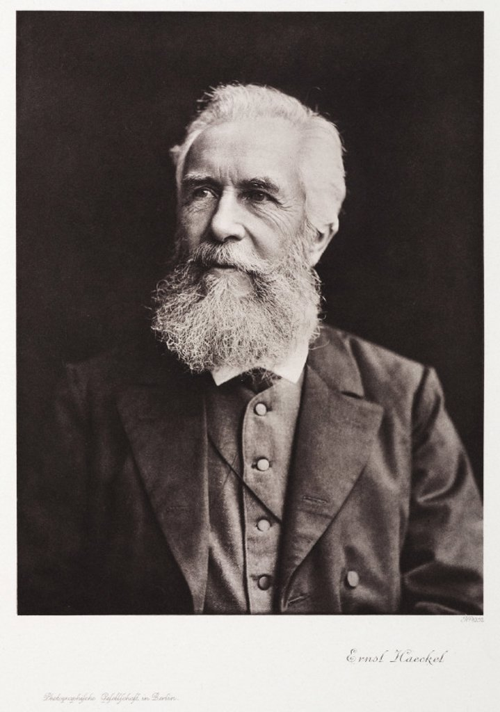 Ernst Haeckel, naturalist, c 1910. : Stock Photo