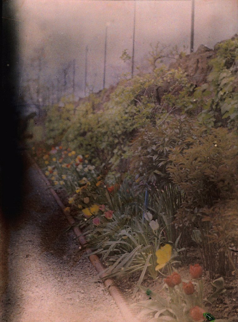 Autochrome of a herbaceous border, c 1910. : Stock Photo