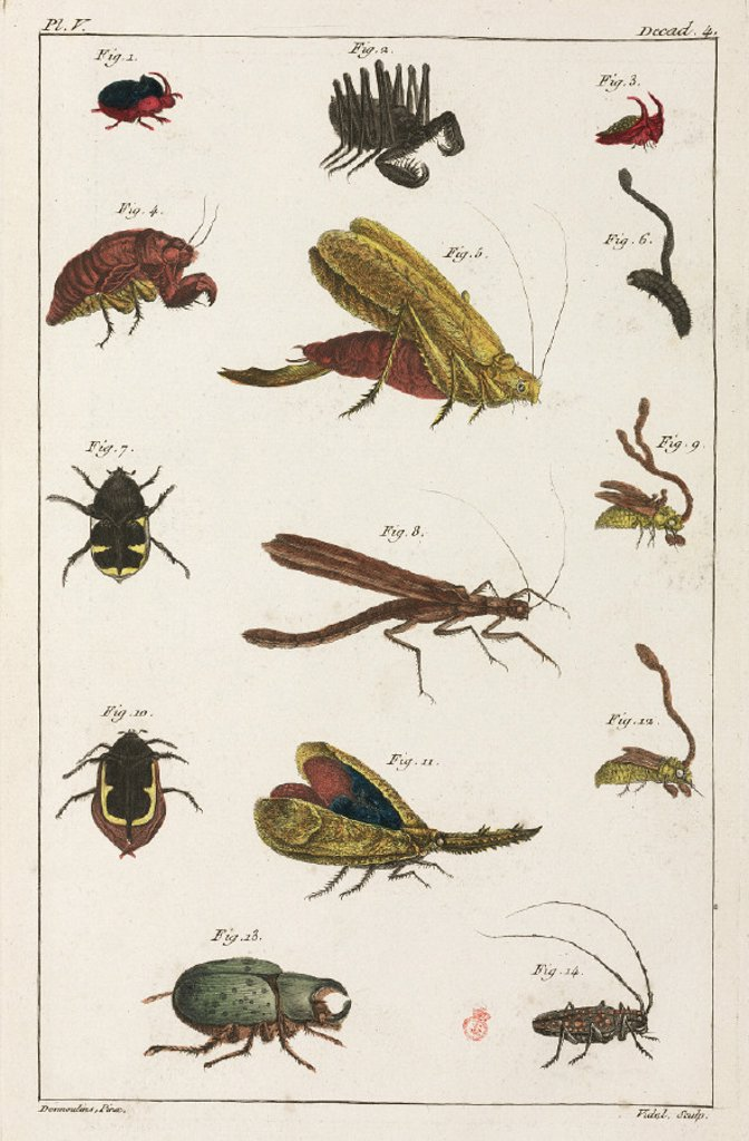 Stock Photo: 1895-28614 Beetles and other insects, South America, 1775-1781.