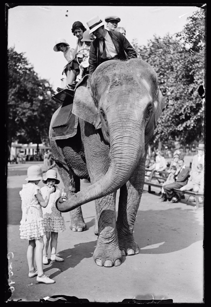 An elephant ride at the zoo, 1933 : Stock Photo