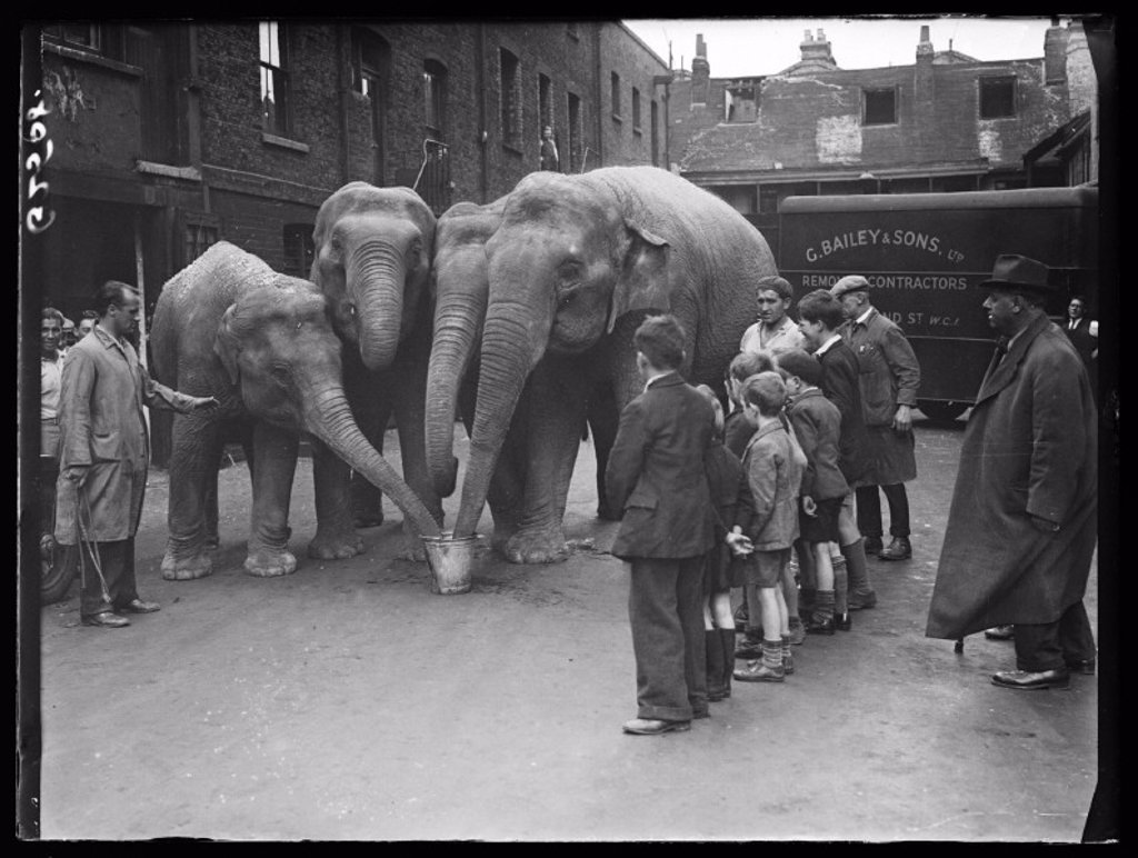 Circus elephants taking a drink, 1938 : Stock Photo