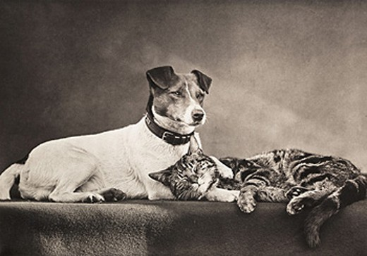 'The Good Companions', c 1889. : Stock Photo