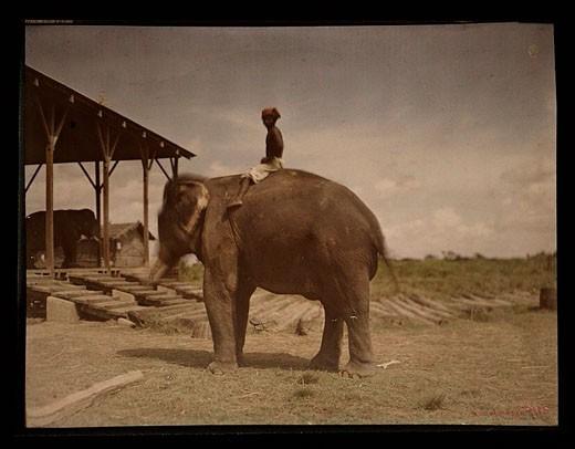 Boy on an elephant, c 1914 : Stock Photo
