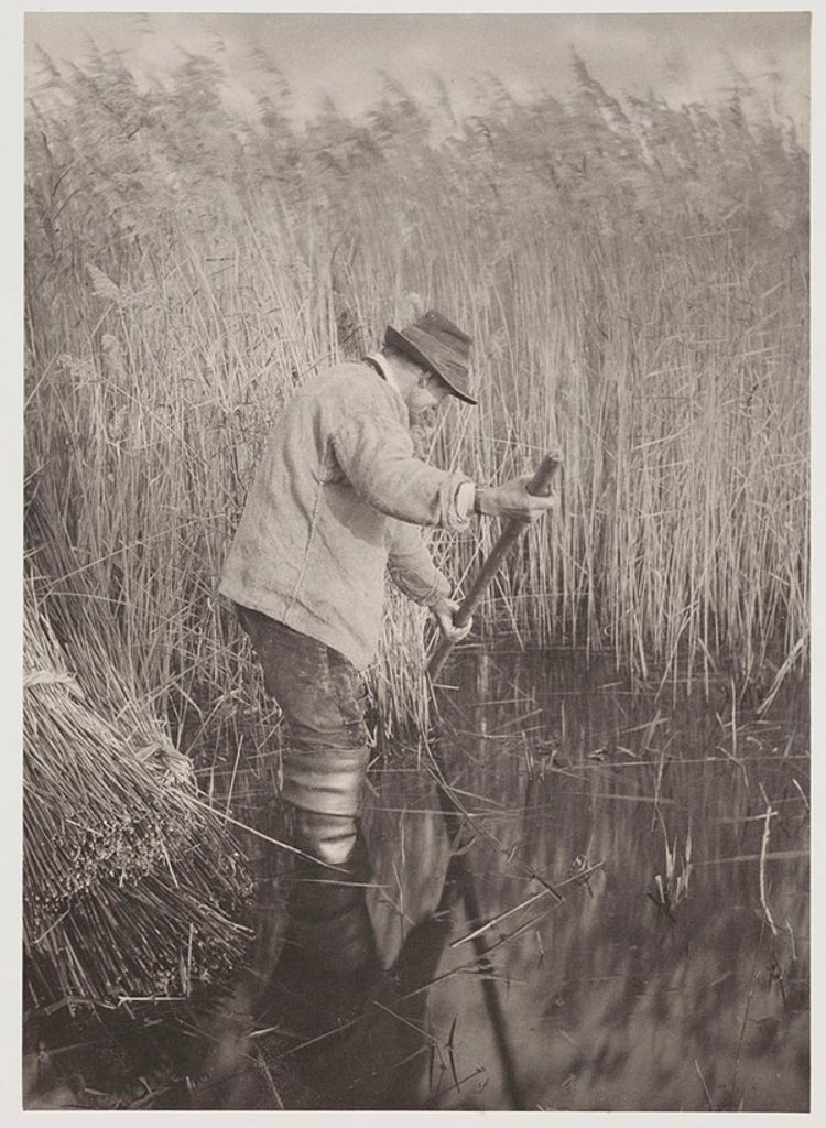 'A Reed-Cutter at Work', 1886 : Stock Photo