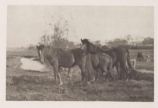 'Colts on a Norfolk Marsh', 1888 : Stock Photo