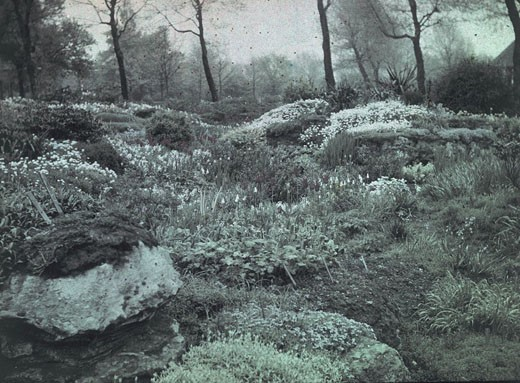 'Rockery in Smiling May', c 1910-1915 : Stock Photo