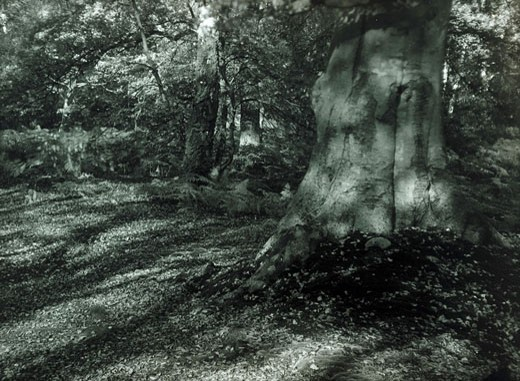 Tree in dappled sunlight, c 1912-1915 : Stock Photo