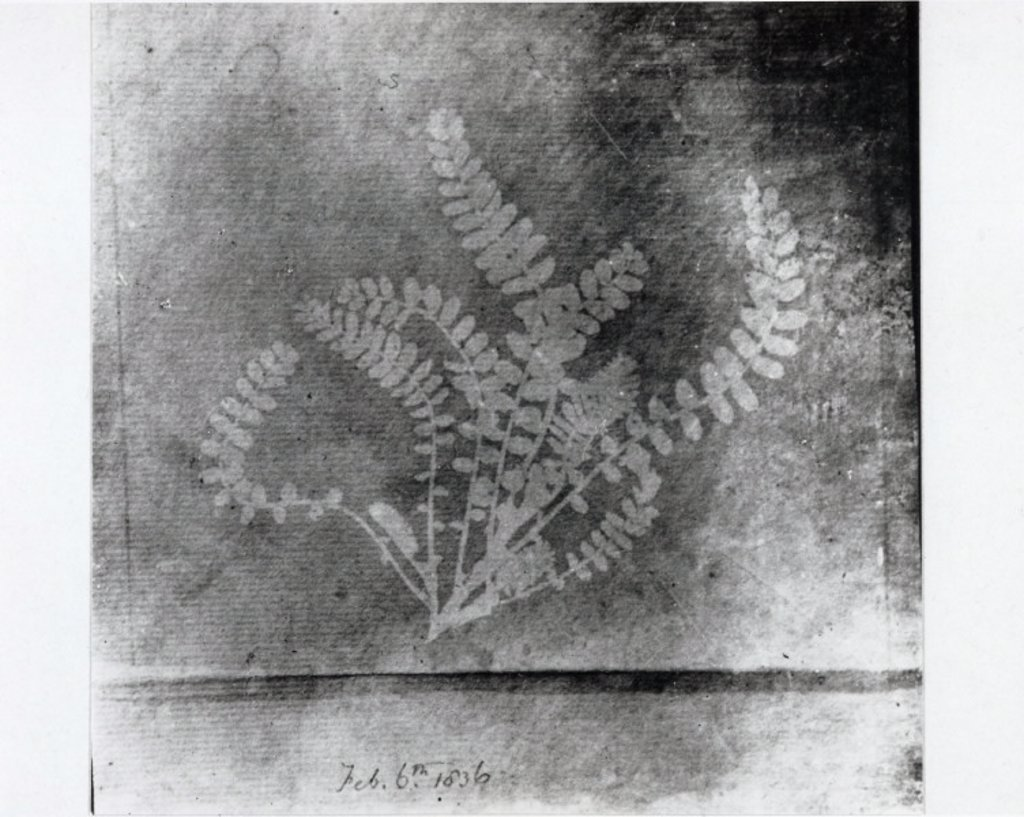 Stock Photo: 1895-9650 Fern, 6 February 1836.