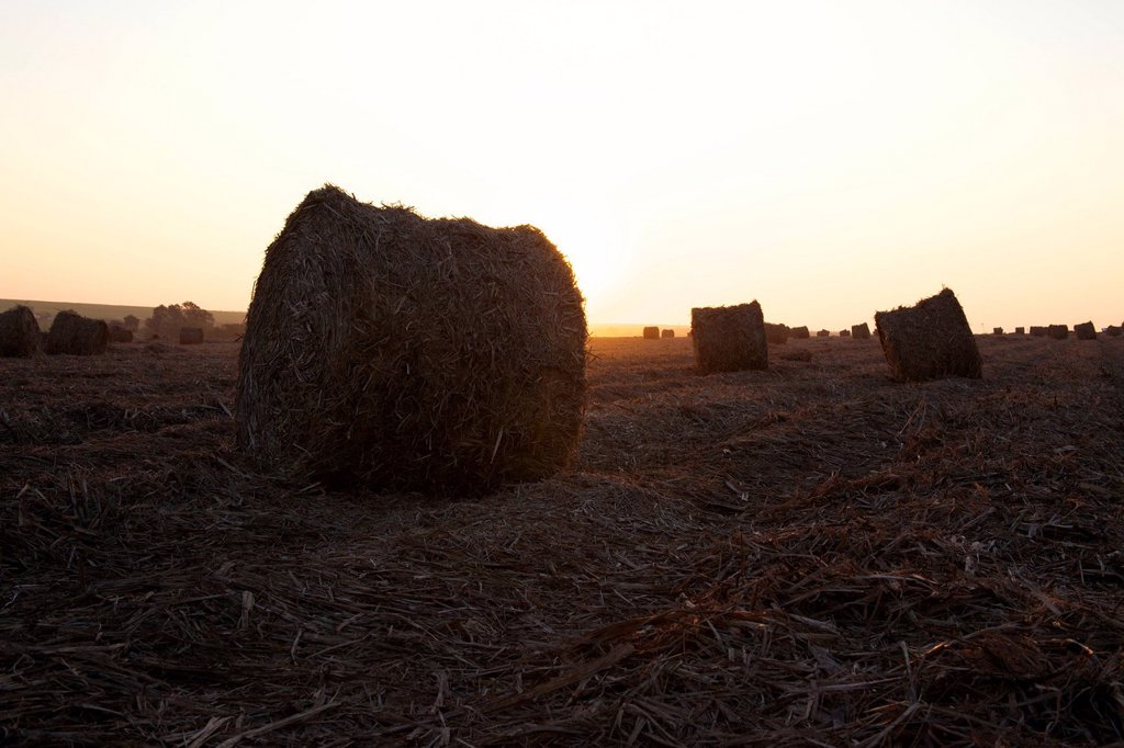 Stock Photo: 1896R-17500 Sunset on bales of leaves left over from the sugar cane harvest, Big Bend, Swaziland, Southern Africa