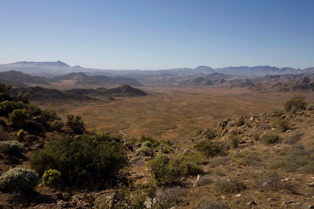 The Richtersveld is located in South Africa´s northern Namaqualand, this arid area represents a harsh landscape where water is a great scarcity and only the hardiest of lifeforms survive, Northern Cape Province : Stock Photo