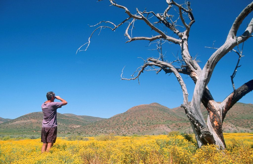 Stock Photo: 1896R-2667 Man Standing in Canola Field Looking Through Binoculars  Sabona Reserve, Kruger National Park, South Africa