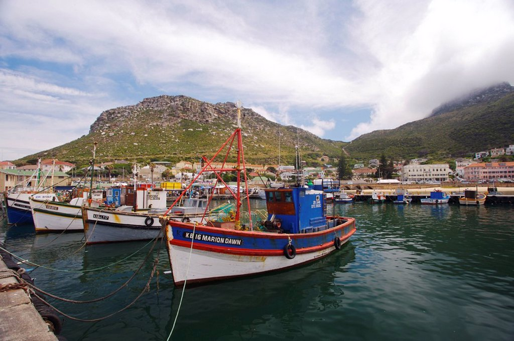 View of the Harbour with Local Fishing Boats in Foreground  Cape Town, Western Cape Province, South Africa : Stock Photo