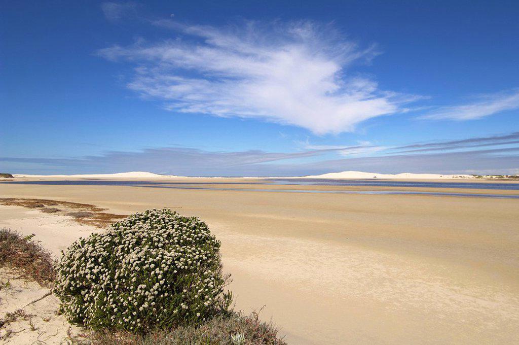 Esturine Landscape  De Mond Nature Reserve, Western Cape Province, South Africa : Stock Photo