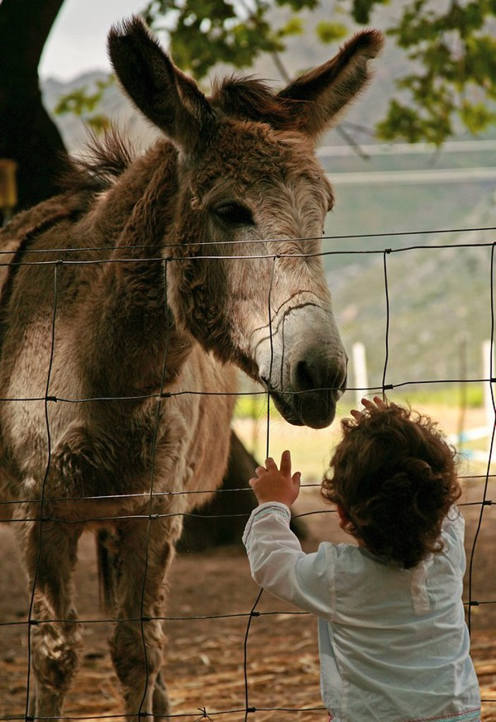 Young Boy Looking at a Donkey  Zoological Gardens, Western Cape Province, South Africa : Stock Photo