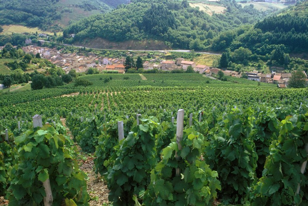 Stock Photo: 1896R-5187 View Over Vineyards to a Small Town  Beaujolais, Rhone Valley, France