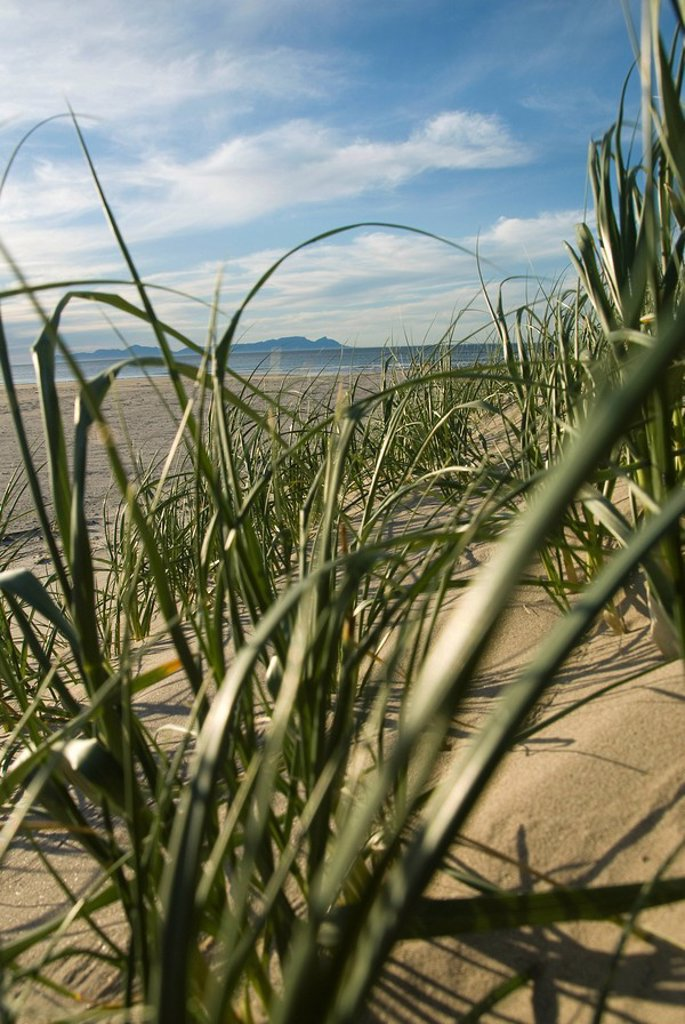 Plants on sand dunes with Table Mountain and Cape Peninsula in background, False Bay, Cape Town, Western Cape Province, South Africa : Stock Photo