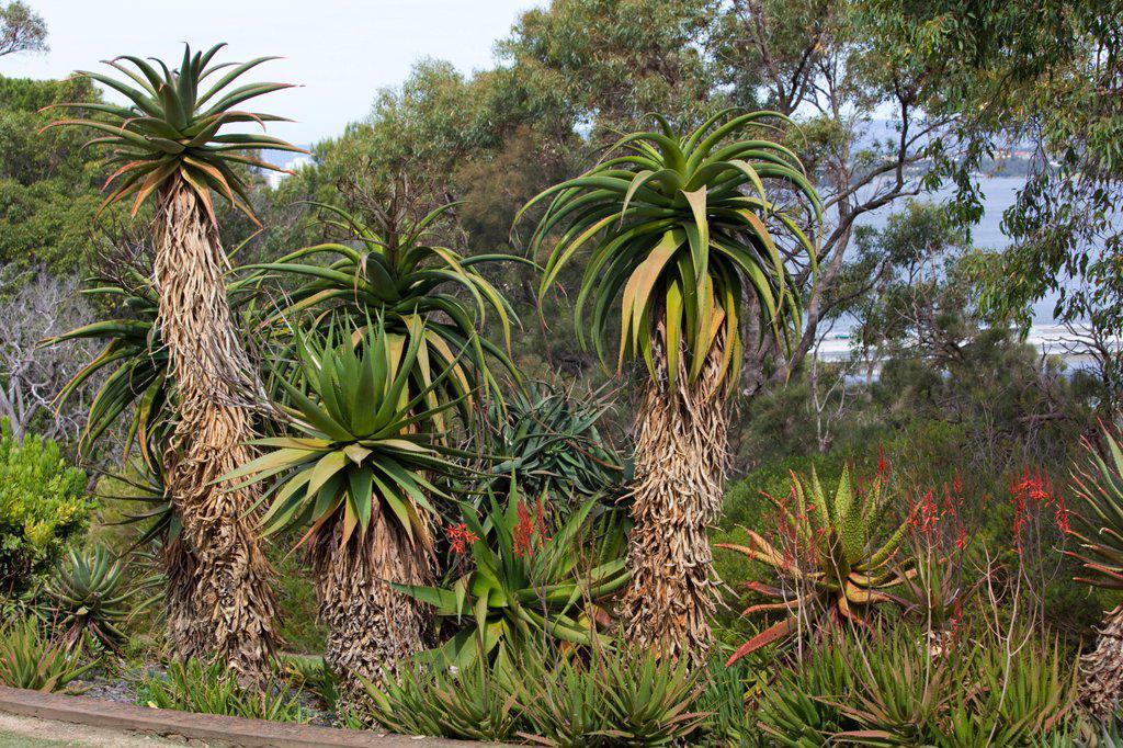 Various trees in botanic garden, Kings Park, Perth, Western Australia, Australia : Stock Photo