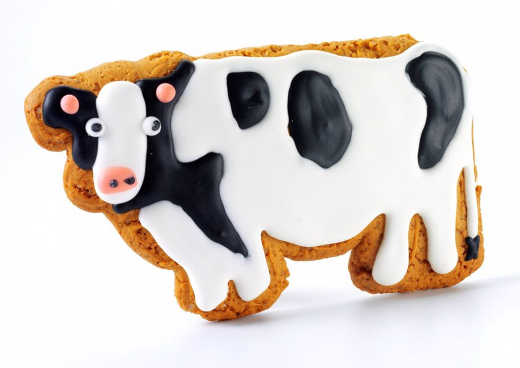 Stock Photo: 1898-14498 Iced Cow Shaped Biscuit Or Cookie