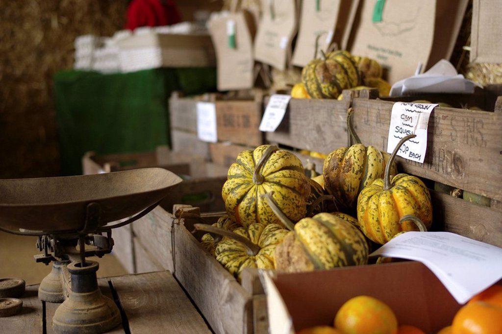 Farm Shop Harlequin Squashes : Stock Photo