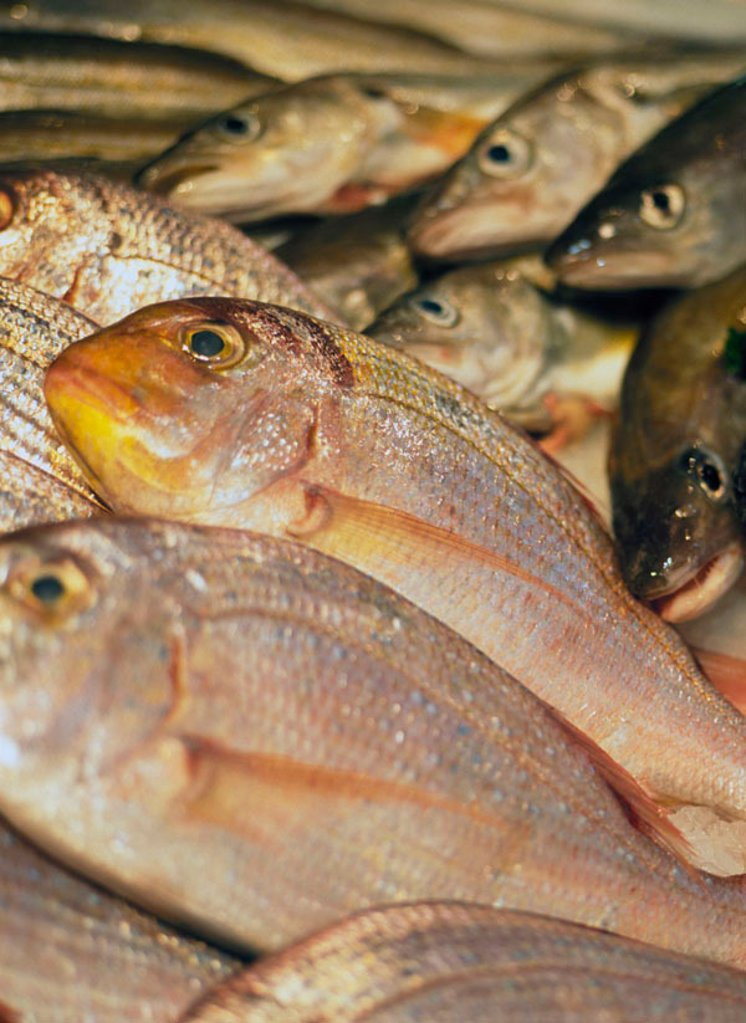 Display of sea bream : Stock Photo