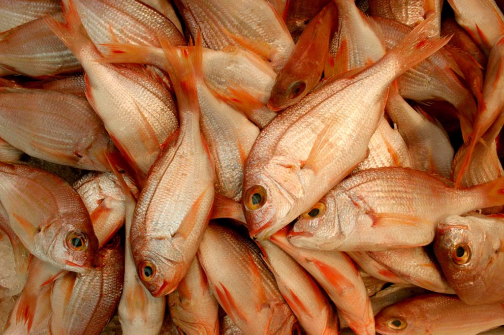 Close up of fresh fish : Stock Photo