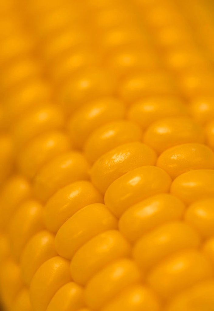 Sweetcorn on the cob : Stock Photo
