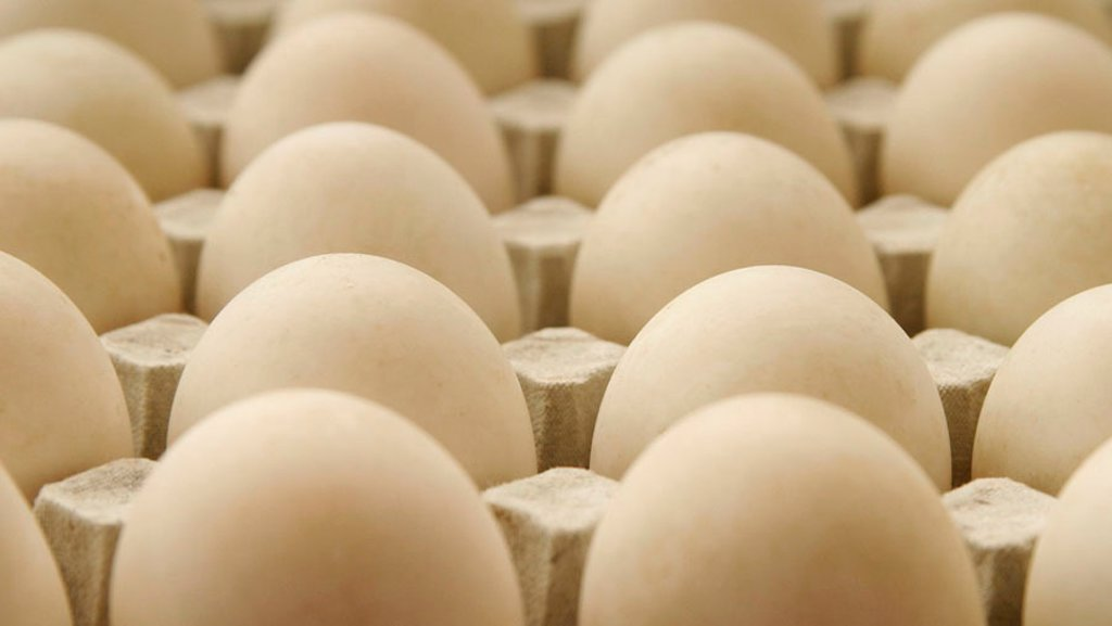 Free range duck eggs in tray : Stock Photo