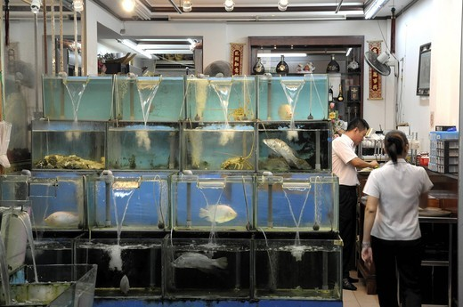 Fish in a restaurant in Singapore : Stock Photo