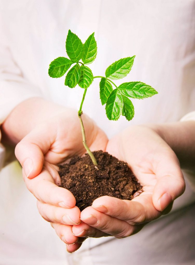Seedling _ green shoots : Stock Photo