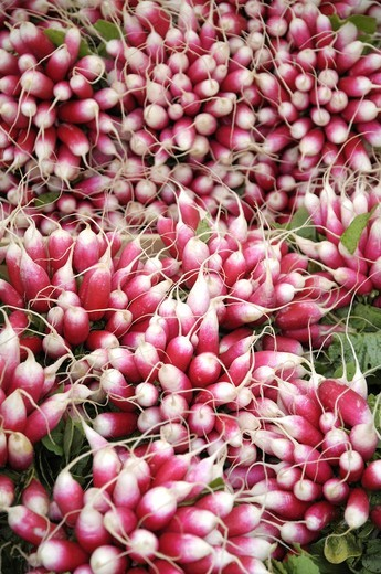 Radishes in the Saturday market in Avallon Burgundy France : Stock Photo