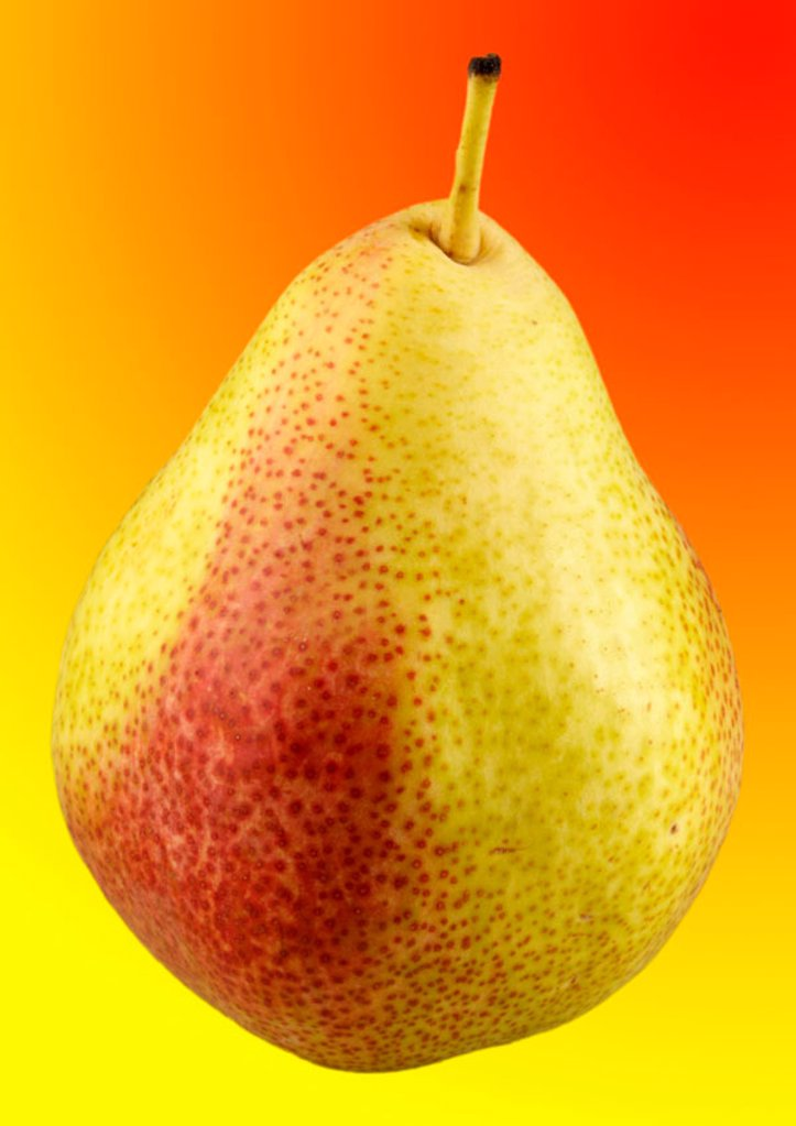 Single pear : Stock Photo