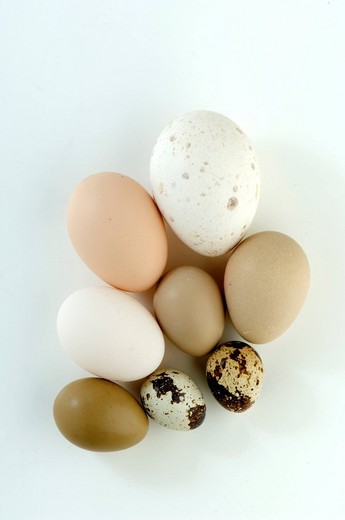 Chicken, duck & quail eggs : Stock Photo