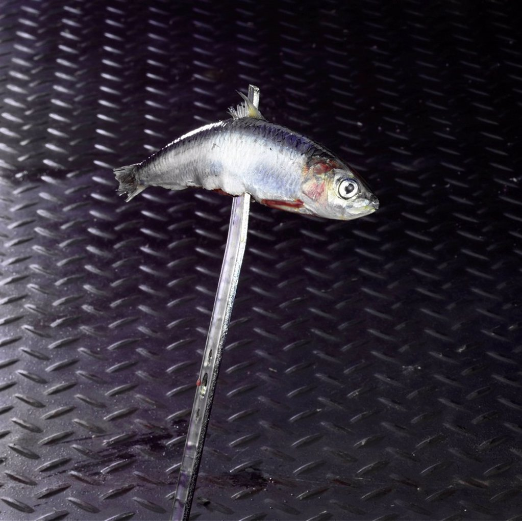 Fish Impaled on a Blade : Stock Photo
