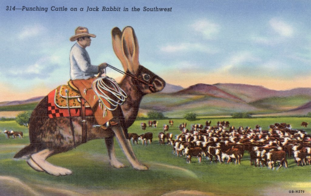 Stock Photo: 1899-10050 Punching Cattle on a Jack Rabbit in the Southwest Postcard. ca. 1940, Punching Cattle on a Jack Rabbit in the Southwest Postcard