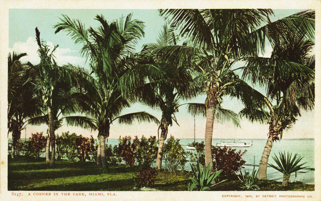 A Corner in the Park, Miami, Fla. Postcard. 1904, A Corner in the Park, Miami, Fla. Postcard  : Stock Photo