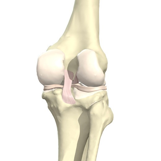 Ligaments of the knee Posterior view IV : Stock Photo