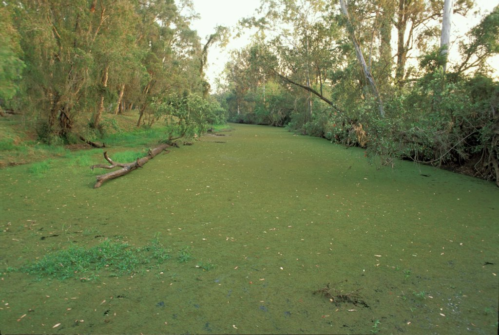 River choked with aquatic plants.  : Stock Photo