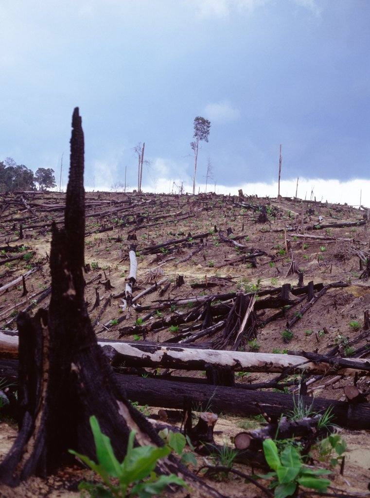 Stock Photo: 1899-21386 Burnt tropical rainforest, cleared for agriculturecausing a loss of biodiversity. .