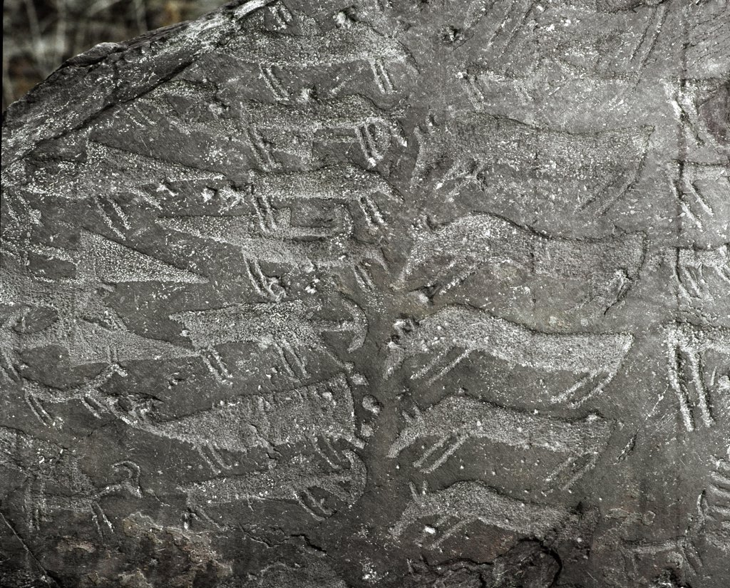 Prehistory, Rupestrian Art: Cemmo 1 (Brescia). Rock engraved with images of deer, oxen, daggers. Eneolithic / Copper Age. Parco archeologico nazionale dei Massi di Cemmo, Cemmo, Italy.  : Stock Photo