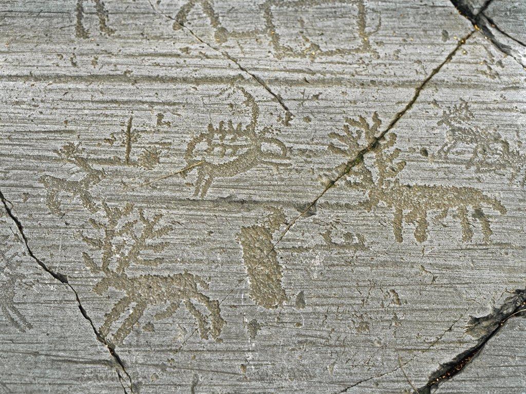 Prehistory, Rupestrian Art: Animals, deers. Rupestrian Engravings from Stone n.1 in Naquane (Brescia). Neolithic Iron Age. Prehistory. Parco nazionale delle incisioni rupestri di Naquane, Capo di Ponte, Italy.  : Stock Photo