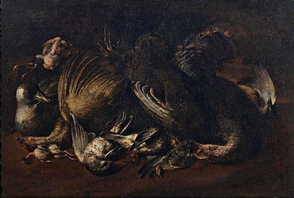 Stock Photo: 1899-32993 Still Life with Game, by Cittadini Pier Francesco, 17th Century, oil on canvas. Italy, Emilia Romagna, Modena, Estense Gallery. Whole artwork. Still life game birds white black dark: brown tones: hues: shades pink light shade: shadow.