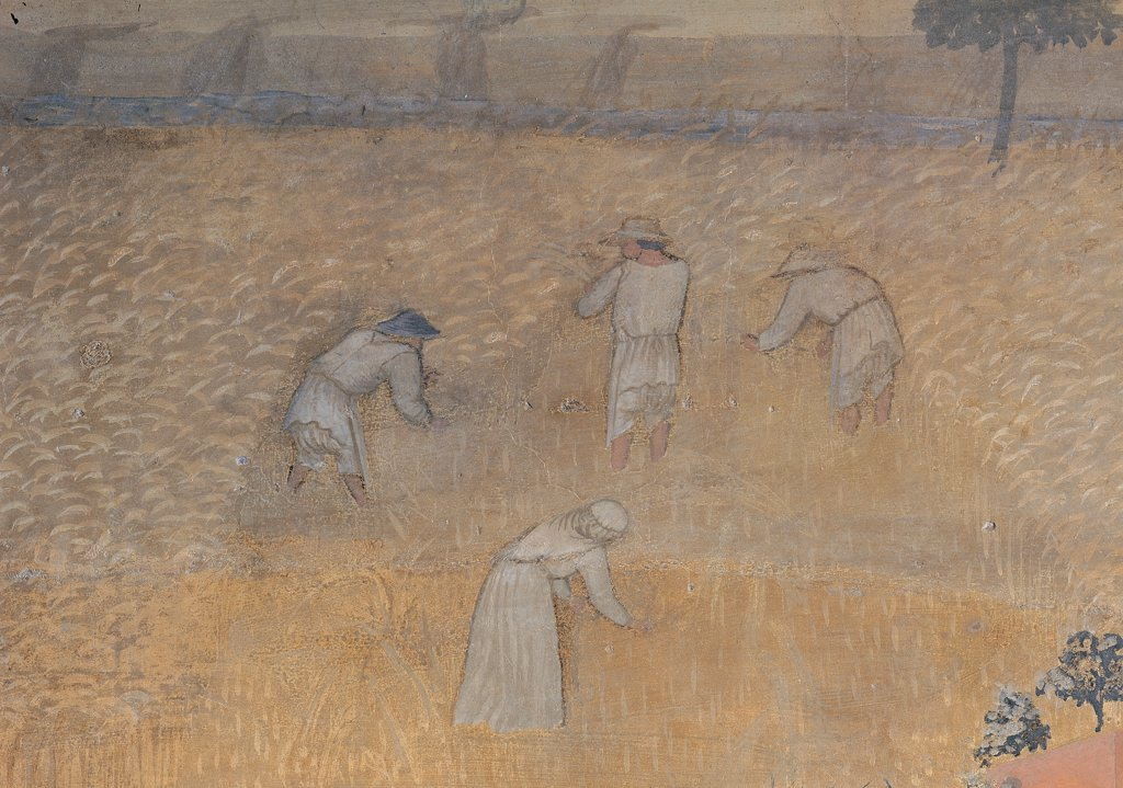 The Effects of Good Government in the City and Country, by Lorenzetti Ambrogio, 1338 - 1339, 14th Century, fresco. Italy: Tuscany: Siena: Palazzo Pubblico: Sala dei Nove. Detail. The effects of Good Government in the country peasants working in the fields in summer harvest yellow : Stock Photo